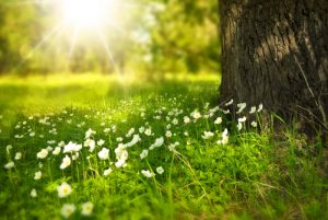 spring-tree-flowers-meadow-60006- 1000X670