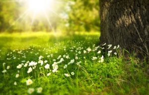 spring-tree-flowers-meadow-60006- 960×611