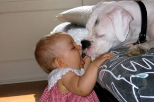 baby and dog 500×334