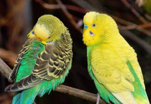 bird-wing-animal-wildlife-green-beak-833355-pxhere.com