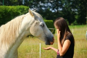 grass-girl-pasture-horse-mammal-stallion-603234-pxhere.com 500×334