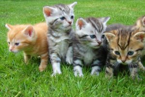 kittens-cat-cat-puppy-rush-45170 500×334