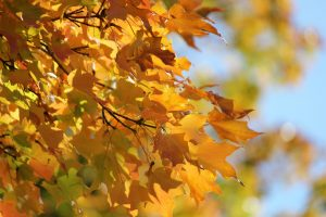 tree-branch-plant-sunlight-leaf-fall-684083-pxhere.com