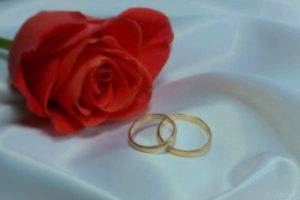wedding rings and rose 500×334