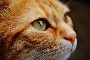 cat-face-close-view-115011