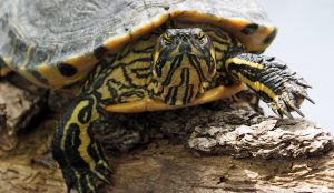 exotic-turtle-head-stripes-portrait-158564