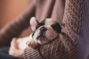 hold sleeping pup